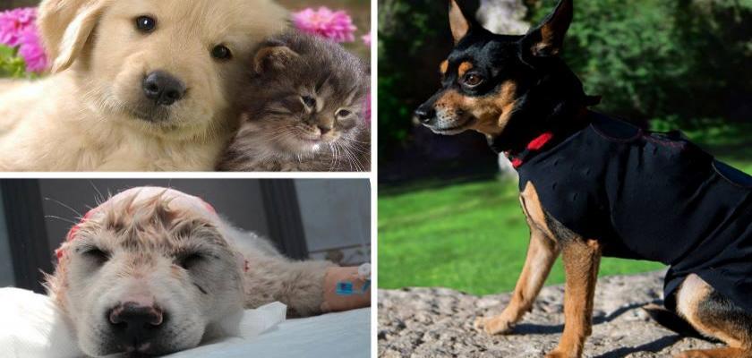 Evcil Hayvanları Seyahate Götürmek