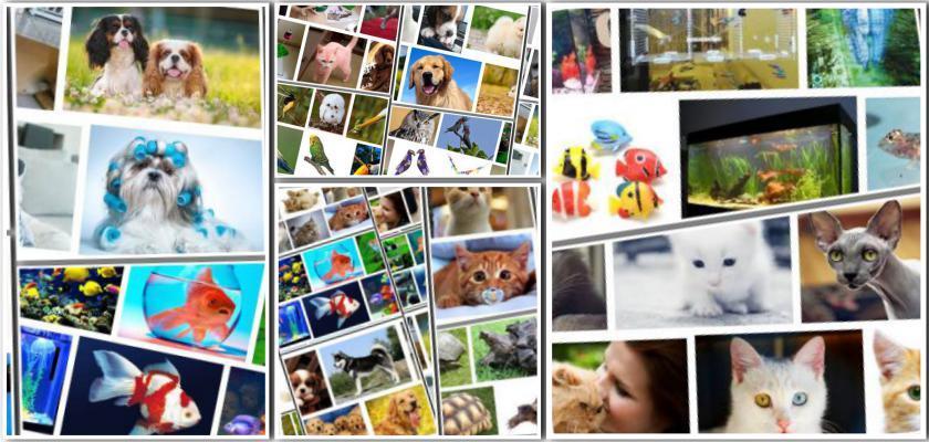 Ev Hayvanlarının Mutlu ve Sağlıklı Olması İçin Nelere Dikkat Etmek Gerekir?