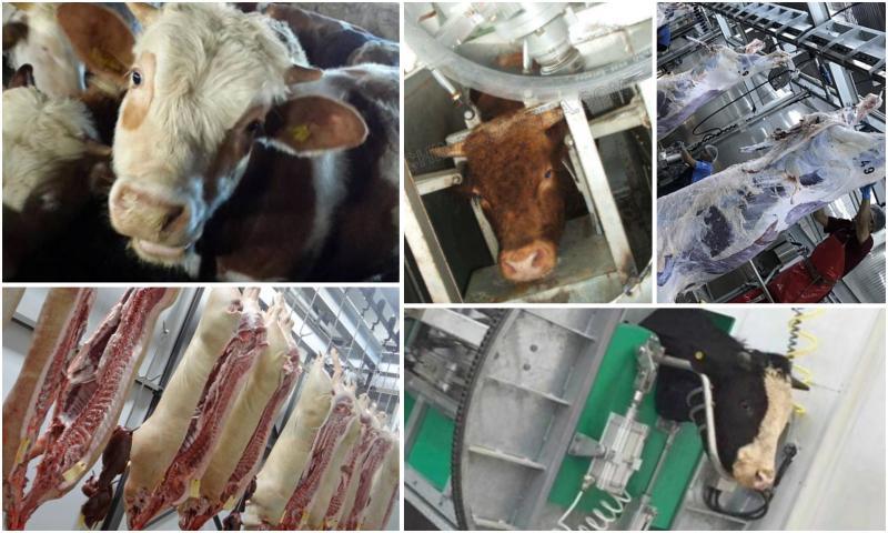 Sığır Kesim Makinelerinin Özellikleri