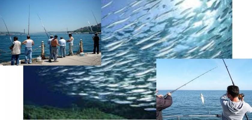 Balık Tutmak İçin Usta Olmaya Gerek Yok