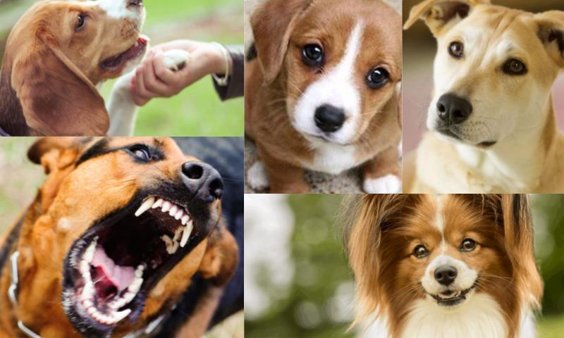 Sizin İçin En İdeal Köpek Cinsi Hangisidir
