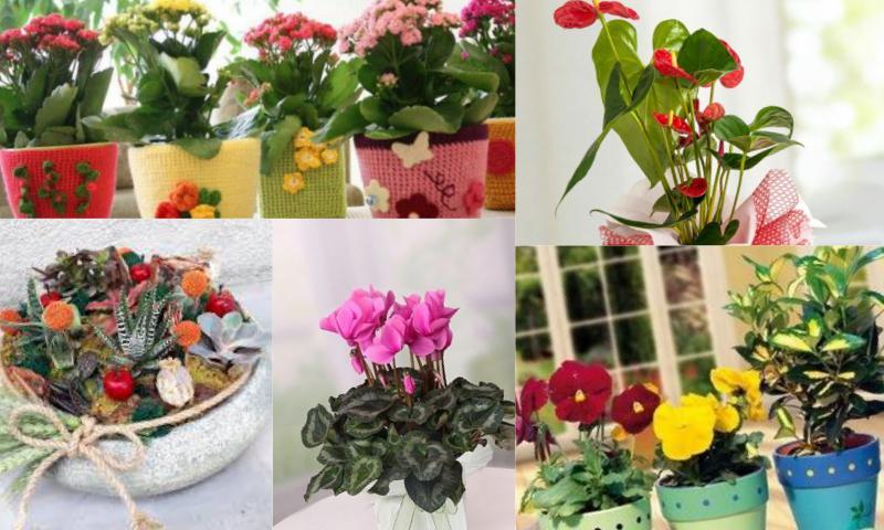 Saksı Çiçeği Tasarımları