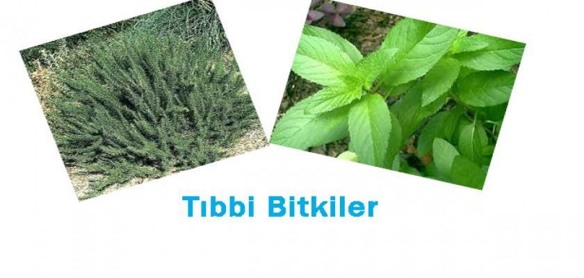 Tıbbi Bitkilerde Dikkat Edilmesi Gerekenler
